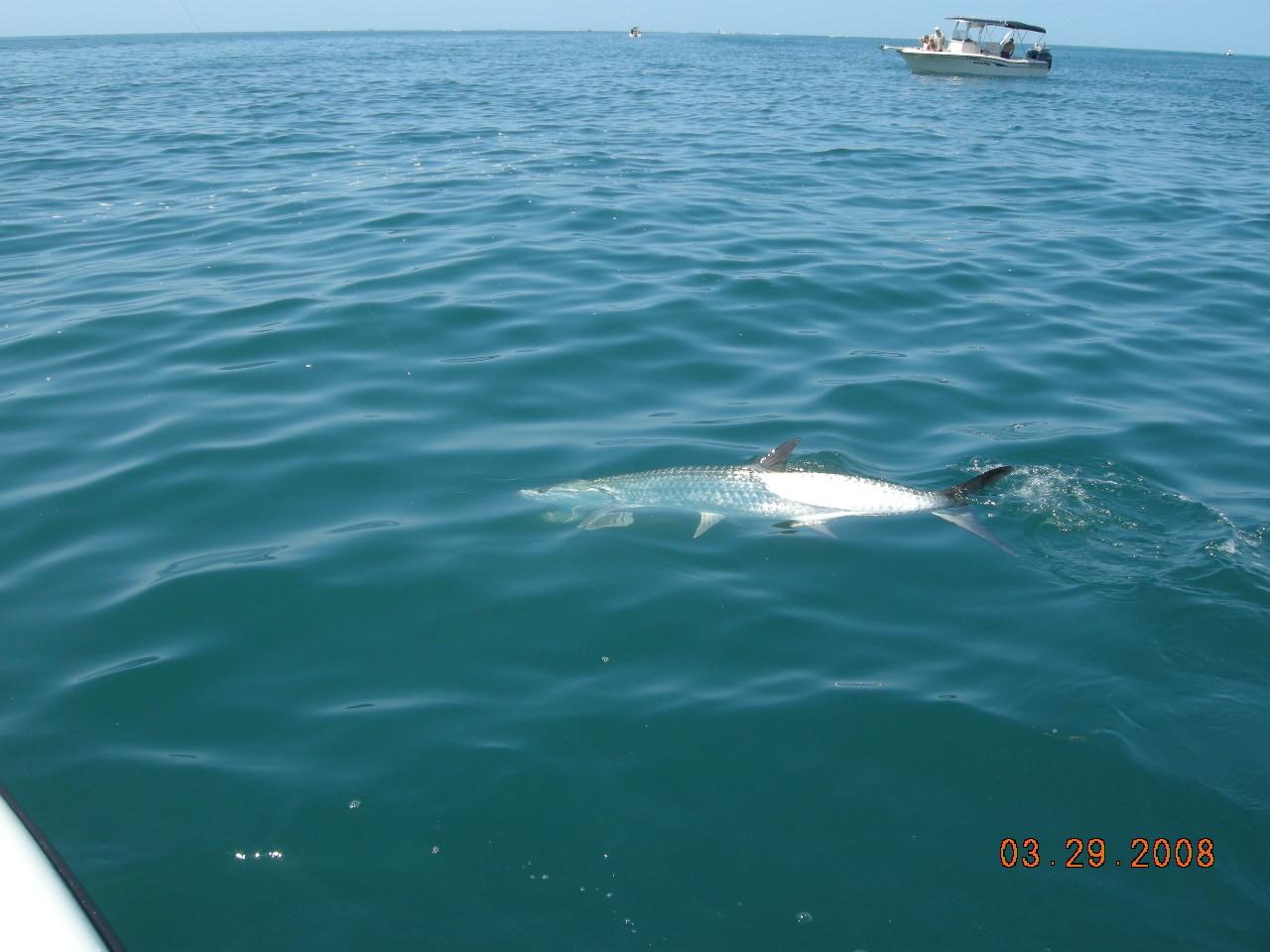 Boca grande driverlayer search engine for Boca grande tarpon fishing