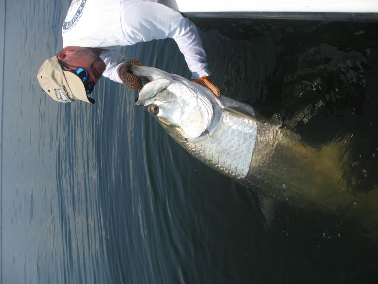 Captain releasing a tarpon