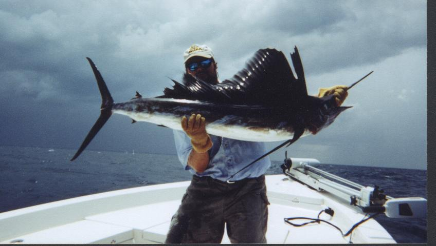 Sailfish of florida's east coast